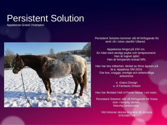 Persistent Solution